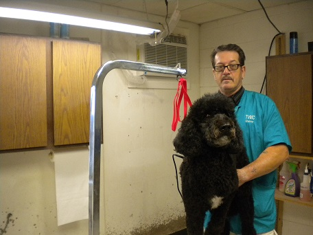Dale Saxton – Professional Pet Groomer